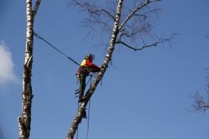 Арборист удаление аварийных деревьев